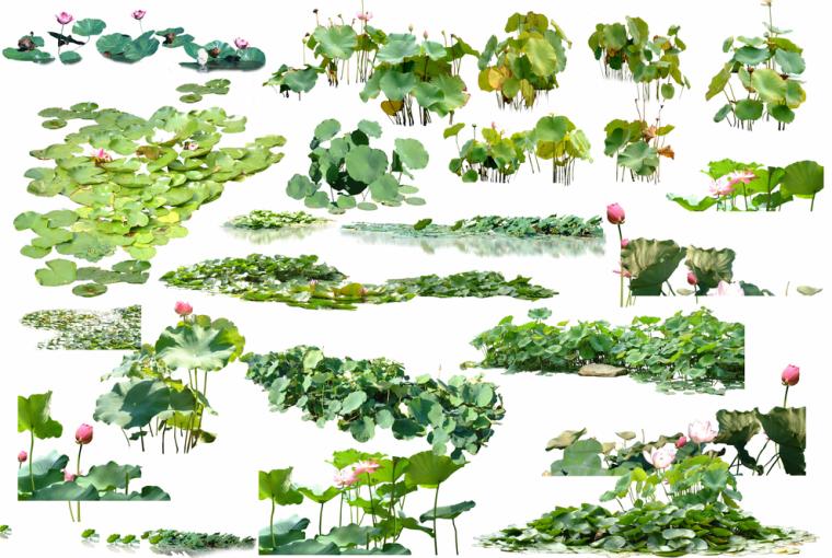 滨水效果图ps素材-水生植物·乔木·鸟兽psd素材