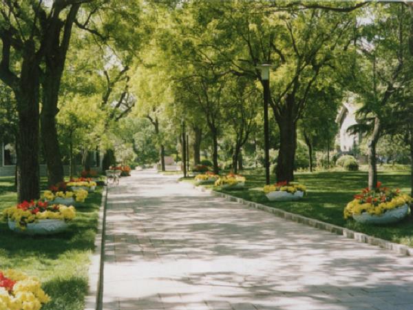 道路植物景观设计PPT(53页)