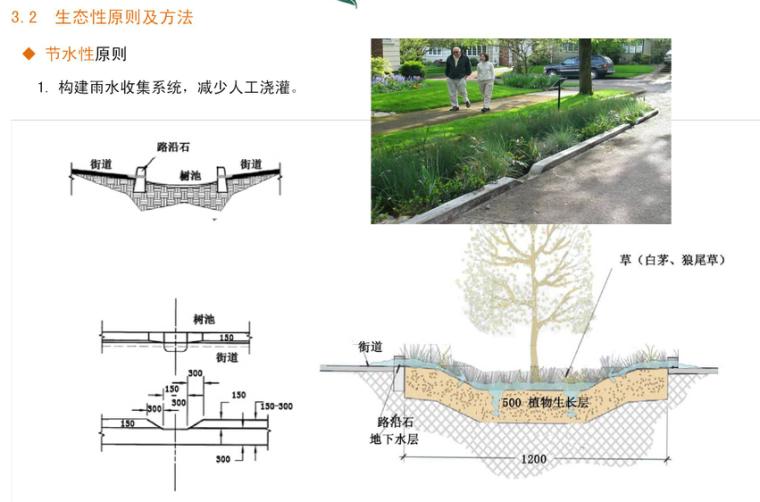 [河北]秦皇岛市道路绿化改造设计方案-土人_11