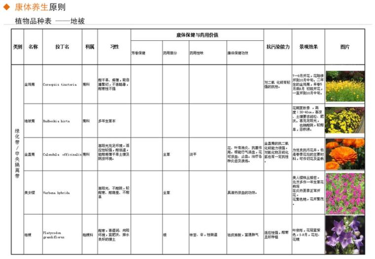 [河北]秦皇岛市道路绿化改造设计方案-土人_12