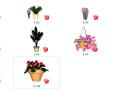盆栽景观植物su模型(21-30)
