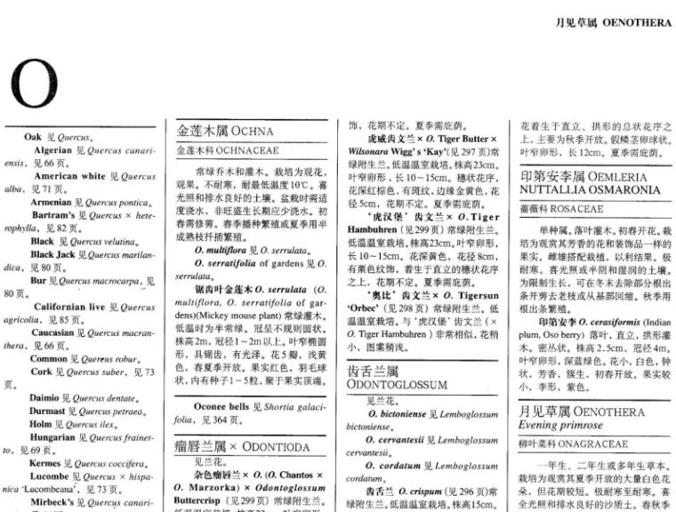 世界园林植物与花卉百科全书-植物词典-O