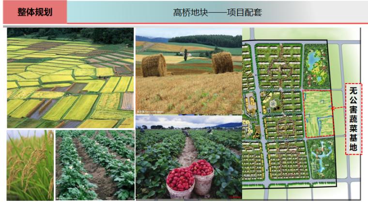 [上海]全配套养老社区规划方案文本,170页_5
