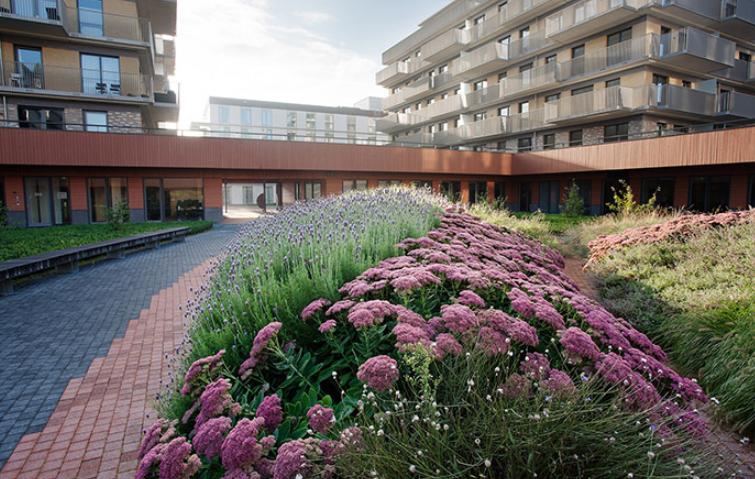Zonnehuis养老院花园景观案例实景图