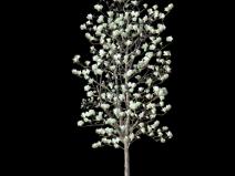 景觀植物ps素材|玉蘭樹psd