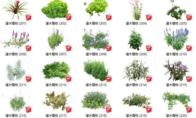 500套花卉灌木植物组件全集C(201-250)