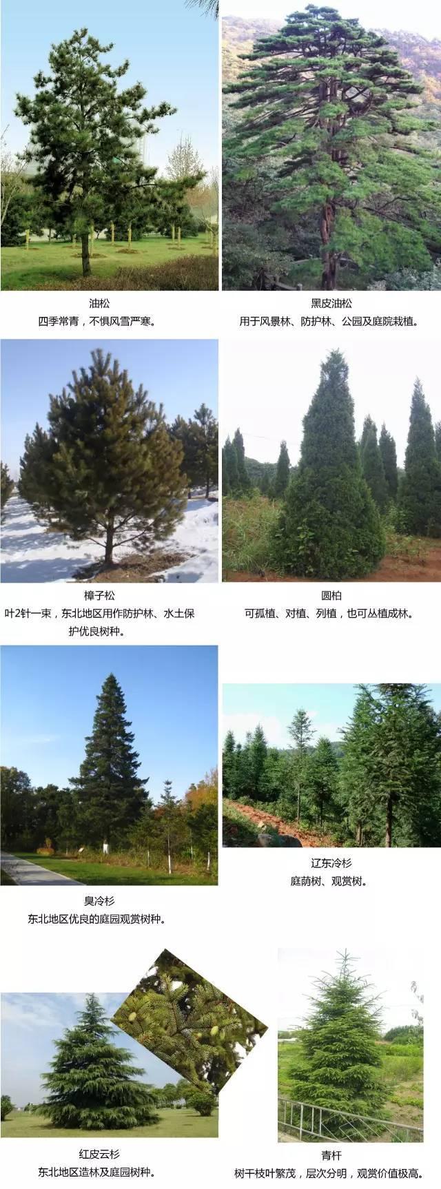 『收藏』常用东北地区植物,齐全了!