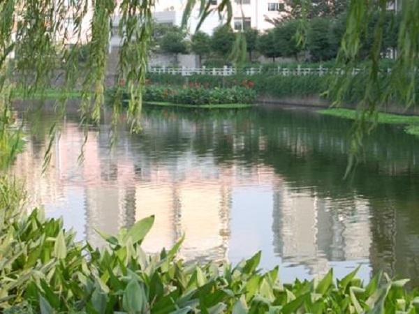 河水生态修复及景观工程方案
