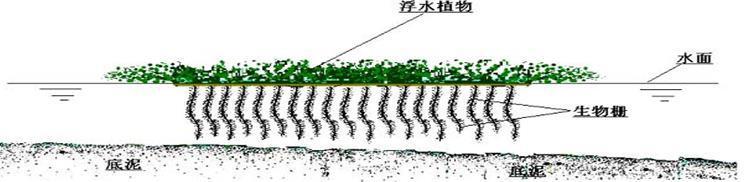 根系生物柵