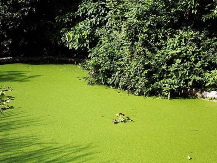 人工湿地在河道生态修复中的应用