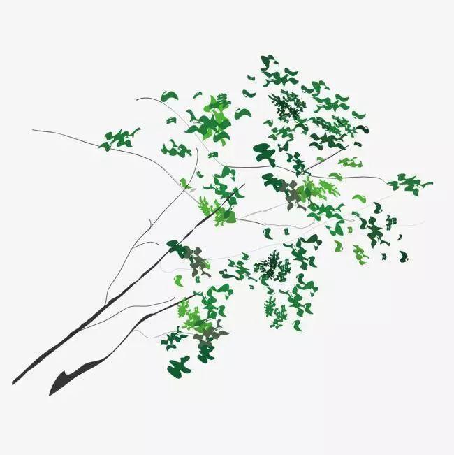 树枝形水库群精准调度的漓江典范