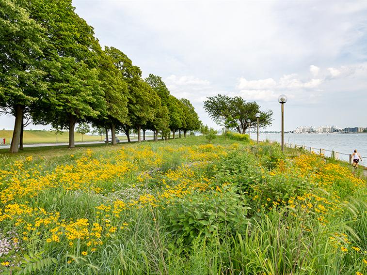 美国麻萨诸塞大学波士顿分校景观设计