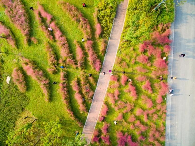 新加坡·南京生态科技岛