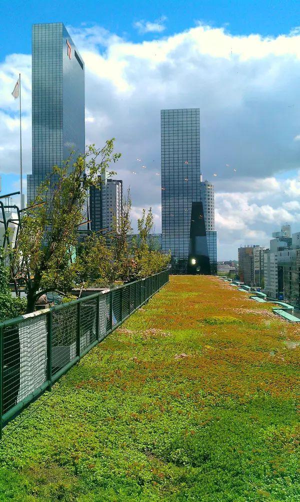 干货丨屋顶绿化知识详解,详细到什么程度你看看_24