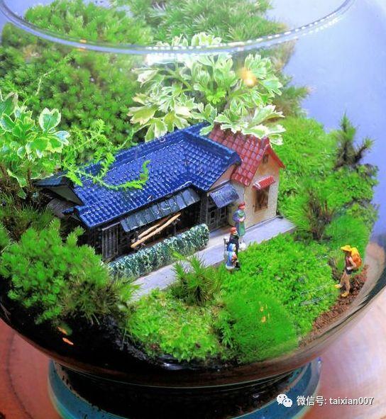 世界顶级苔藓微景观造景,学了就是自己的!