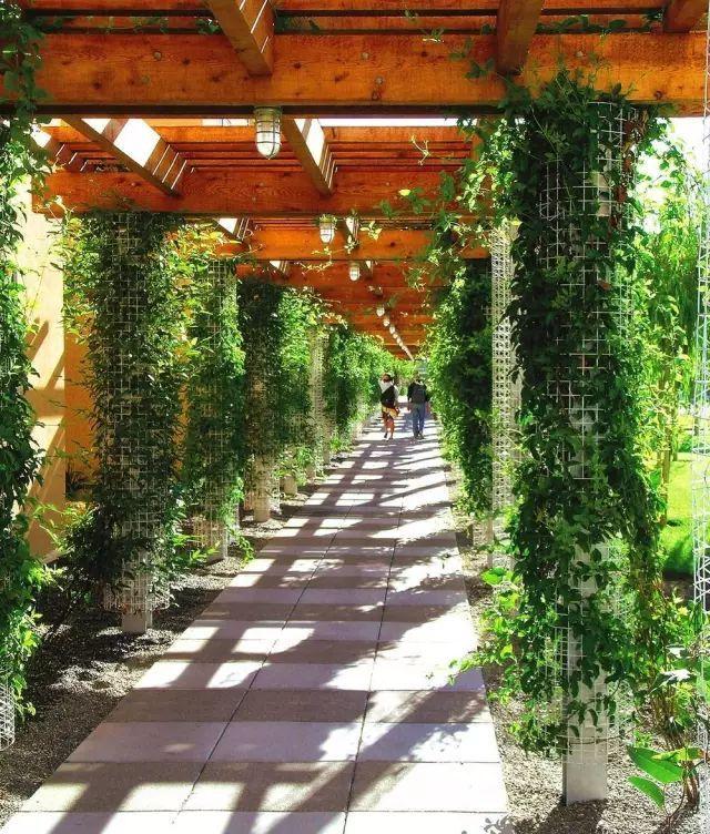 70款·各式景观花架,配上各种藤蔓植物,简直要美翻了!_3