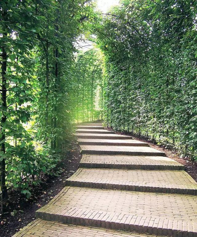 70款·各式景观花架,配上各种藤蔓植物,简直要美翻了!_12