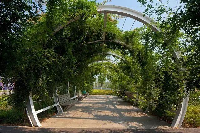 70款·各式景观花架,配上各种藤蔓植物,简直要美翻了!_20