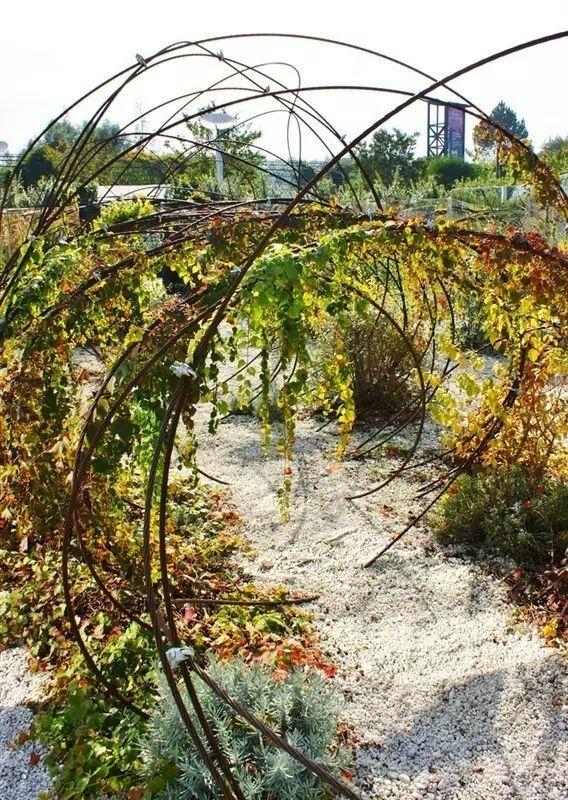 70款·各式景观花架,配上各种藤蔓植物,简直要美翻了!_26