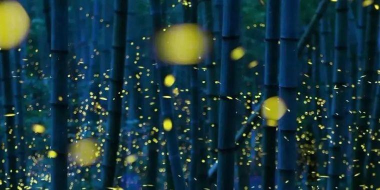 光合·森林|天津首创·禧瑞琨庭_14