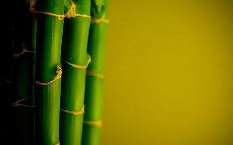 竹结构——轻质高强_1