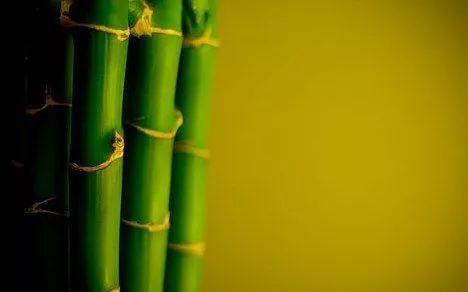 竹结构——轻质高强