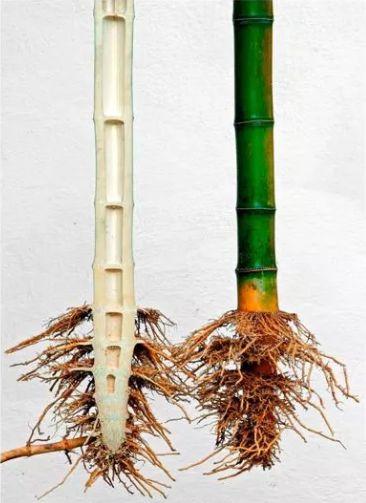 竹结构——轻质高强_8