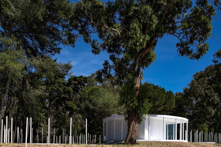 葡萄牙孟山都的白色森林景观-JV_MonsantoCVZ_B_MG_3861