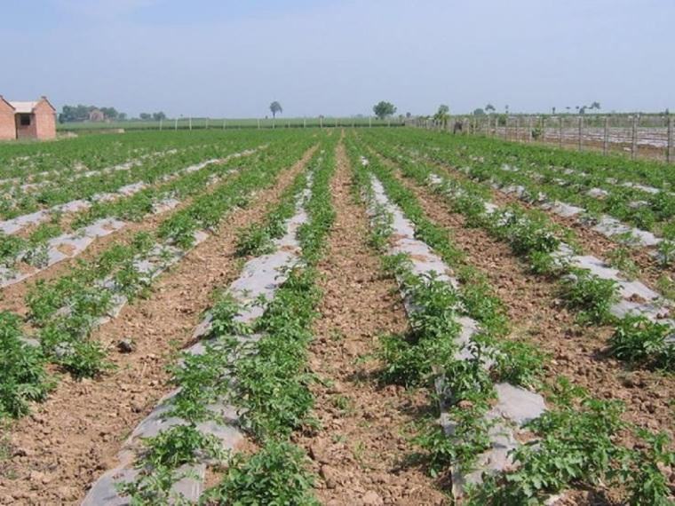 地面节水灌溉技术(76页,内容丰富)