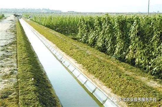 节水灌溉方式大集锦附节水灌溉方案合集