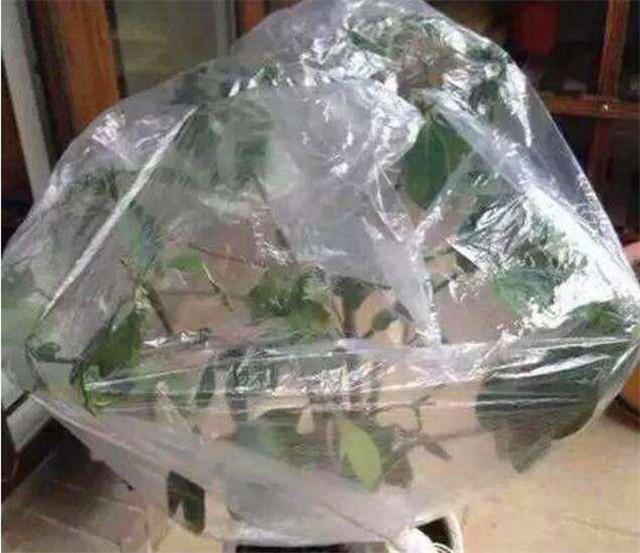 塑料袋养花
