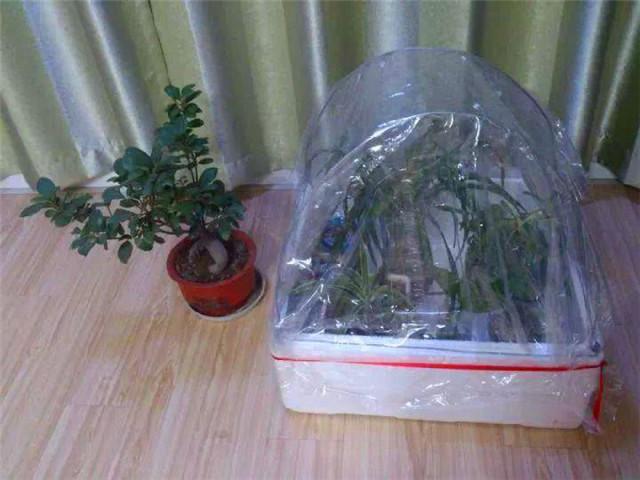 塑料袋养花2
