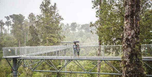 景区的网红加分项,森林步道_23