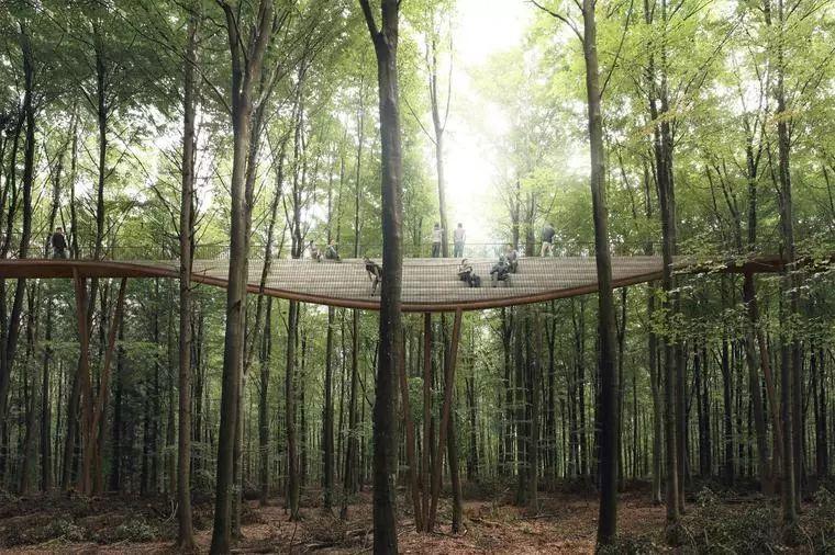 景区的网红加分项,森林步道_27