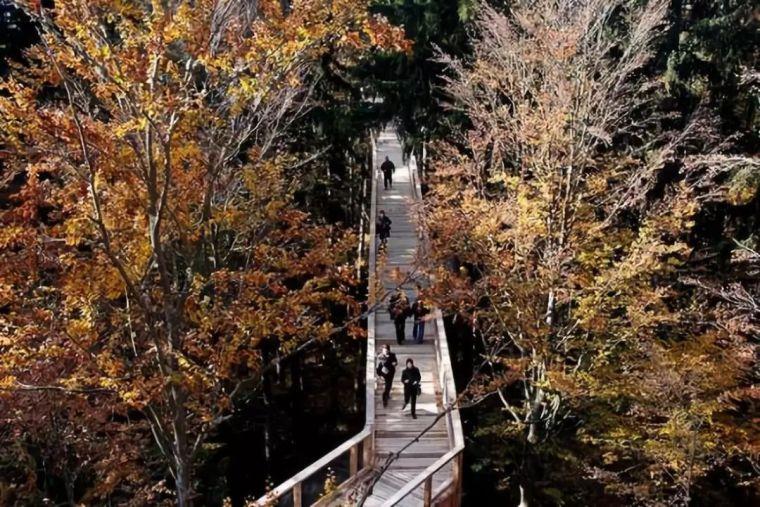 景区的网红加分项,森林步道_35