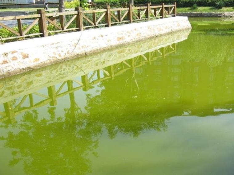 污染河道治理及水体生态修复