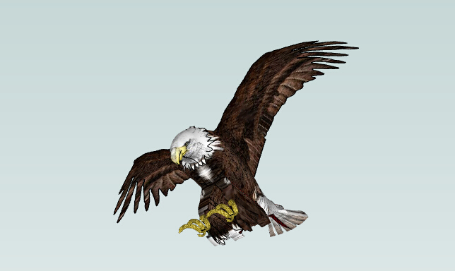 3D动物SU模型-3D动物模型-鹰