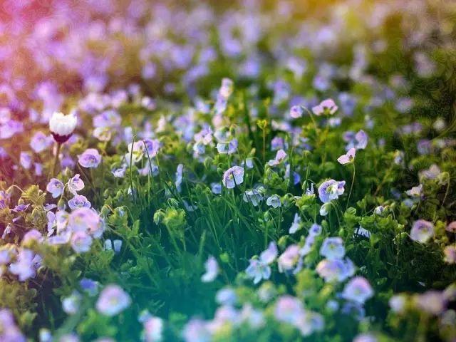 植色丨初学者的植物色彩搭配要诀