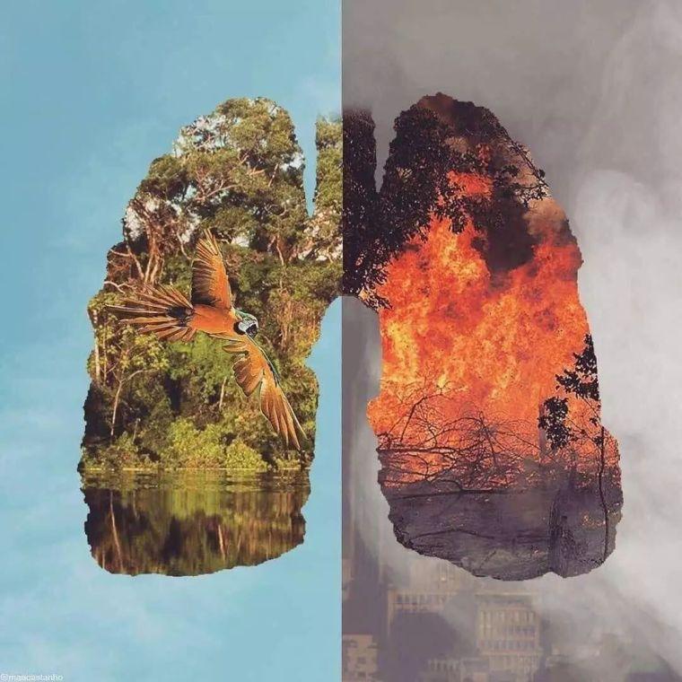 救救地球吧!这场森林大火,已经燃烧了21天