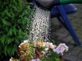 秋季浇水有窍门,养花30年的老花农手把手