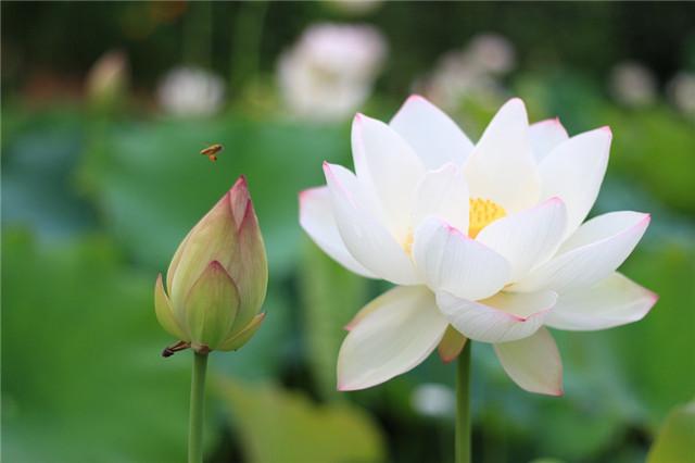 """佛教""""五树六花""""中的六花,原来是它们,涨"""