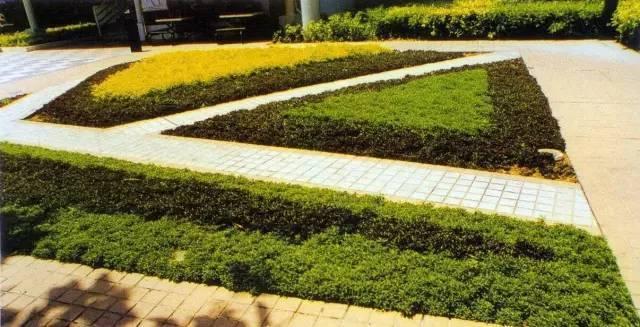 景观设计师必知常见园林地被植物!