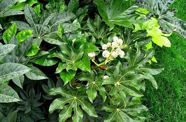 干货|近百种户外植物名称大全_6