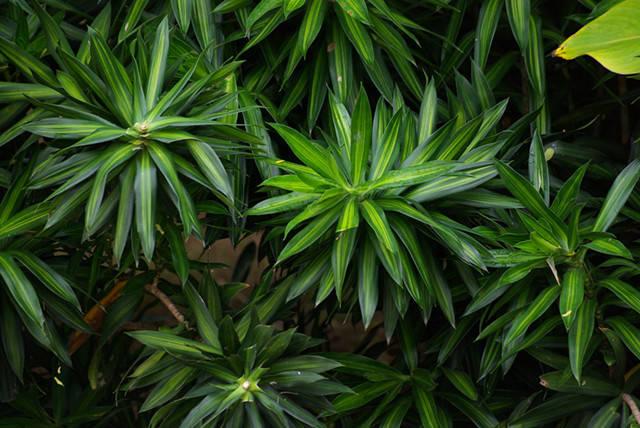 干货|近百种户外植物名称大全_10