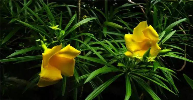 干货|近百种户外植物名称大全_47