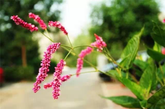 干货|近百种户外植物名称大全_44
