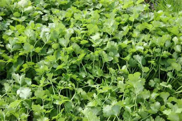 干货|近百种户外植物名称大全_49