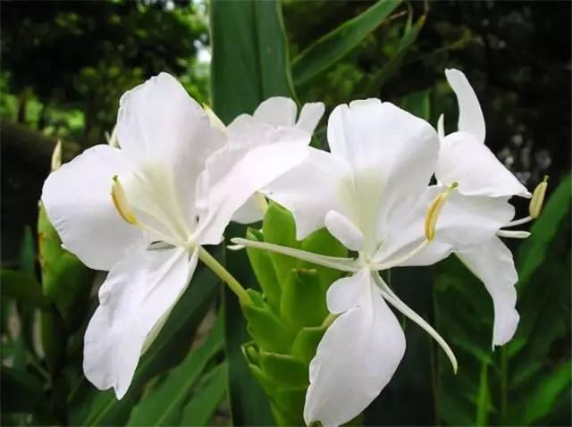 干货|近百种户外植物名称大全_55