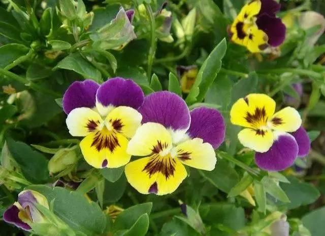 干货|近百种户外植物名称大全_56