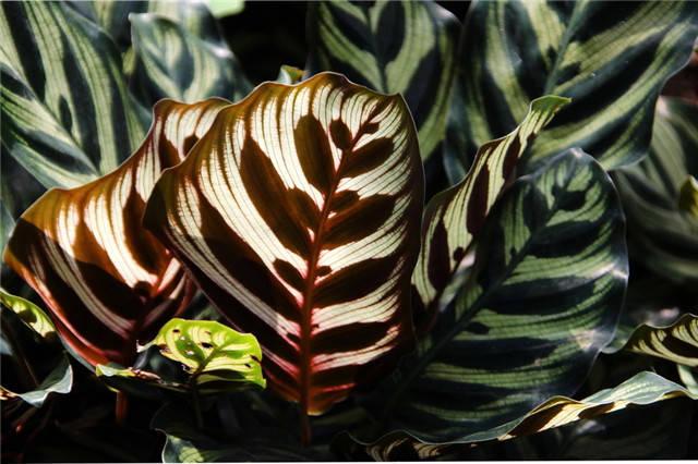 干货|近百种户外植物名称大全_66